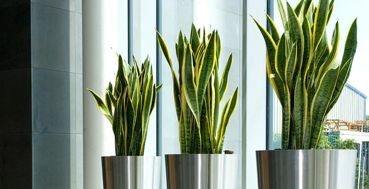 http://agroturf.me/wp-content/uploads/2015/03/indoor-plants-1.jpg